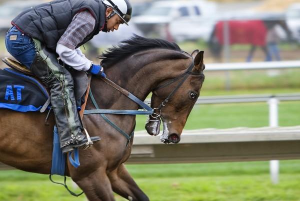 racehorse-419742_1920